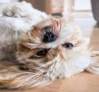 6 Pros & Cons of Owning a Dog in College